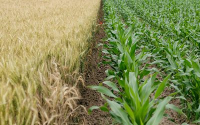 The Agtech Pitch Deck or Investor Deck(Part 1 of 5)